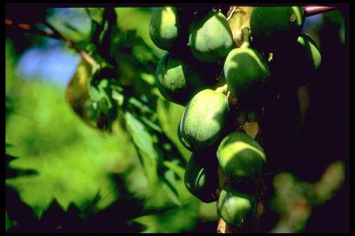 owoce-500.jpg