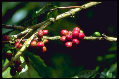 owoce-male-500.jpg