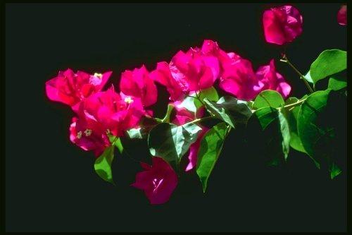 piekny-kwiat-500.jpg