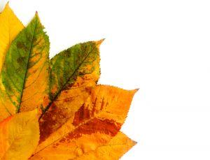 1233944_autumn_leaves
